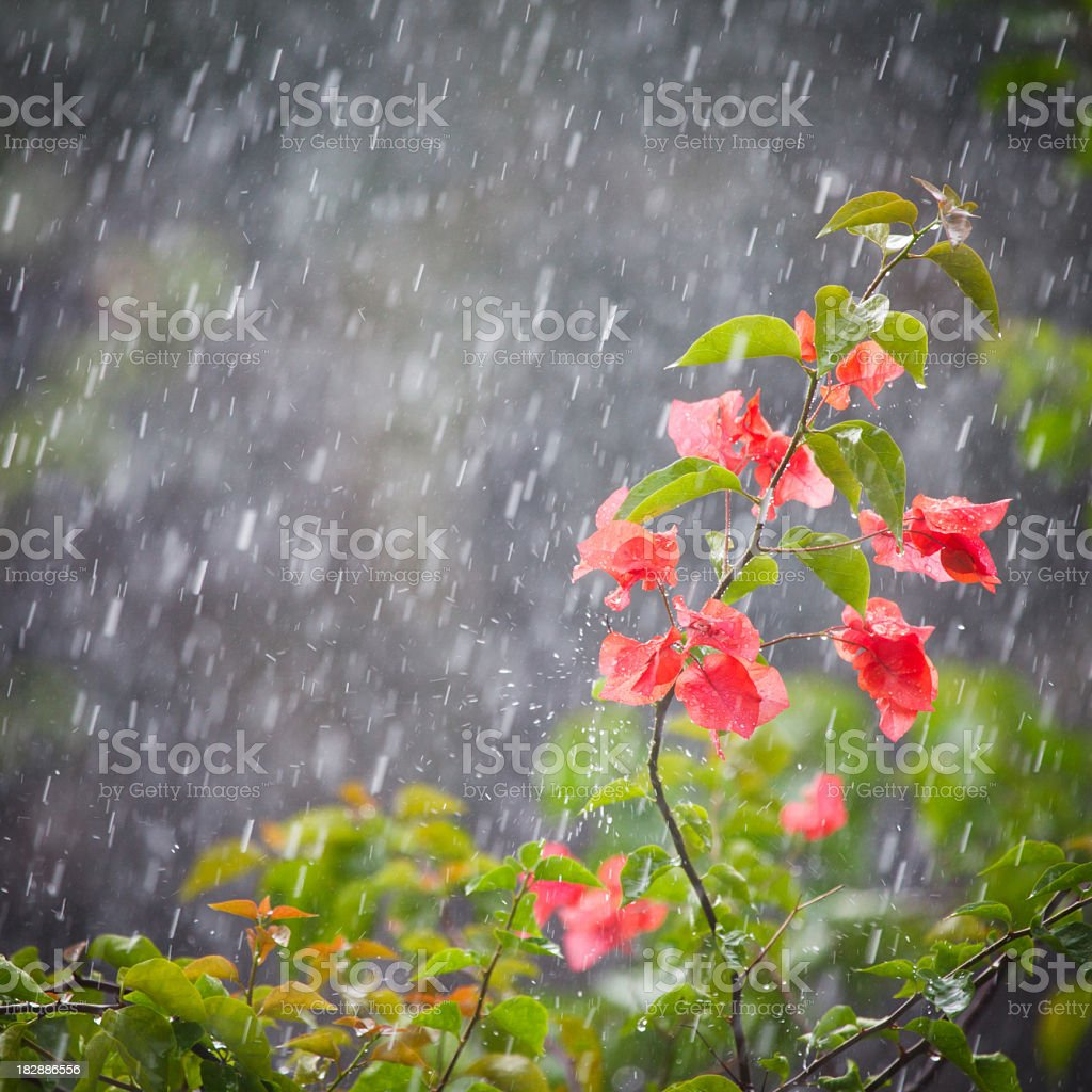 tropical rain flower stock photo