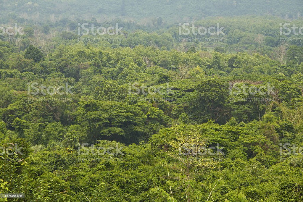 Tropical rain forest in Thailand. royalty-free stock photo