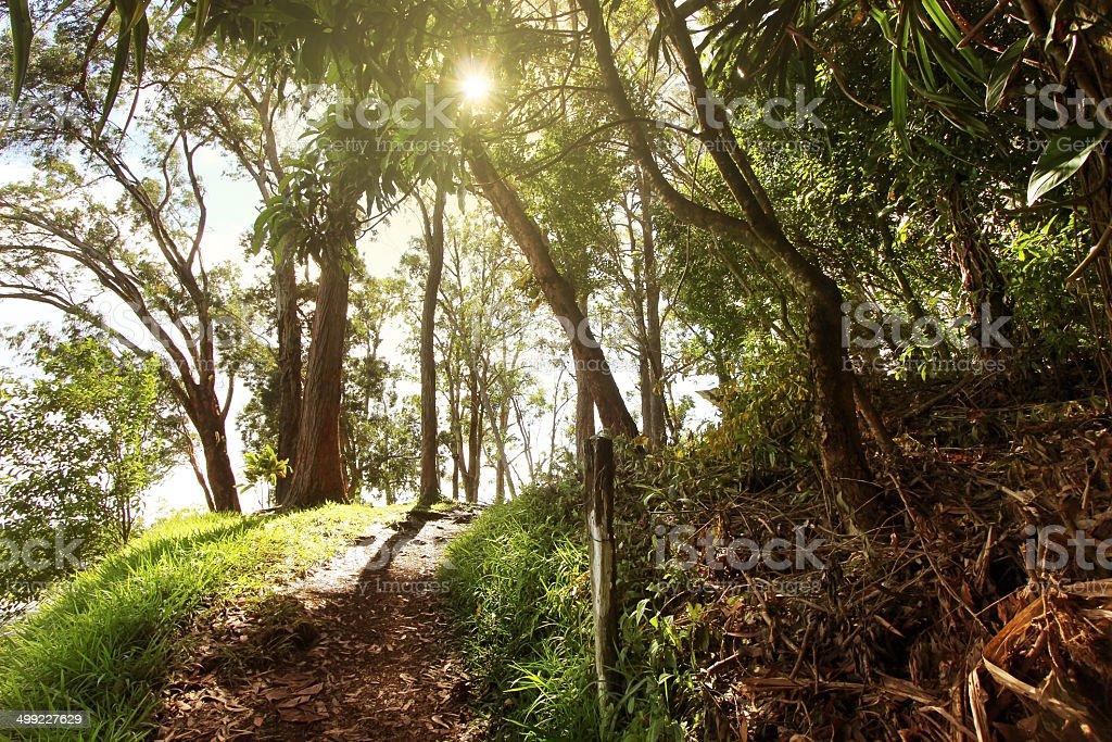 Tropical Rain Forest, Maui, HI stock photo