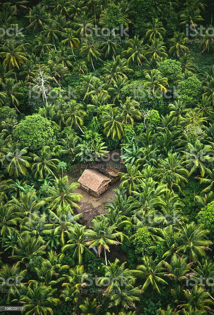 Tropical rain forest & pam trees. royalty-free stock photo