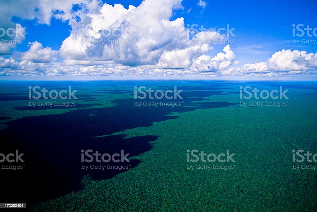 Tropical rain forest. royalty-free stock photo