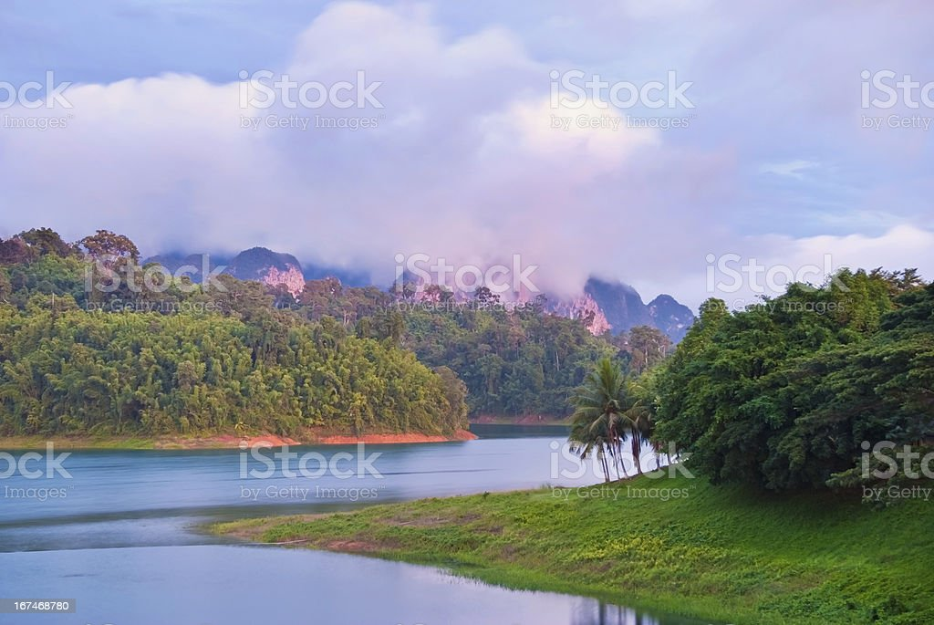 tropical rain forests royalty-free stock photo