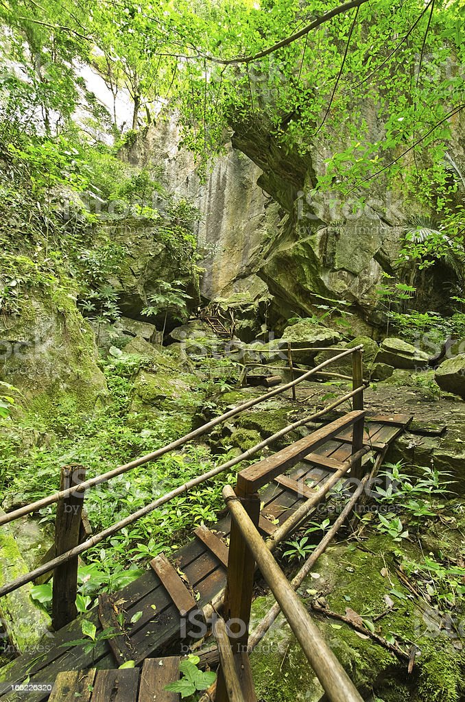 tropical rain forests, Rattanakosin National Park royalty-free stock photo