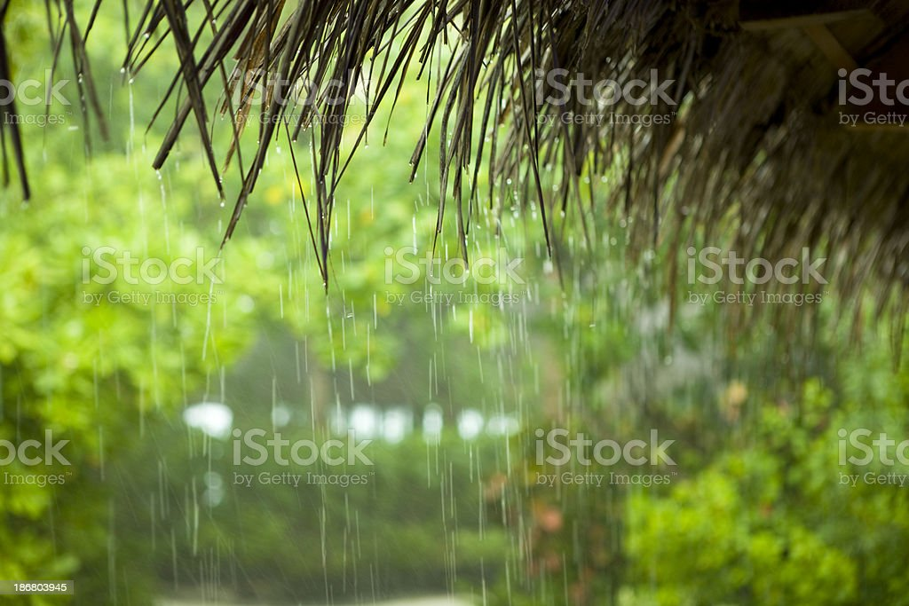 Tropical rain royalty-free stock photo
