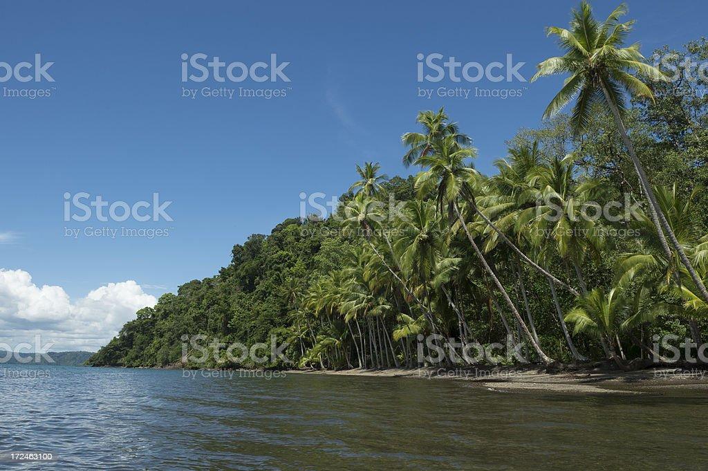 Tropical Rainforest and beach, Costa Rica stock photo