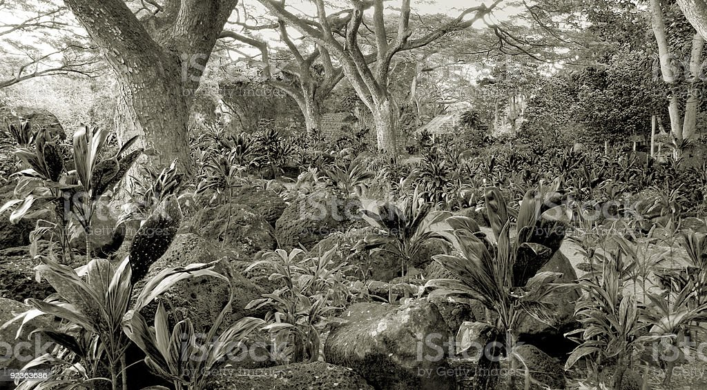 Tropical Rainforest and Kauhale--Traditional Hawaiian living sit royalty-free stock photo