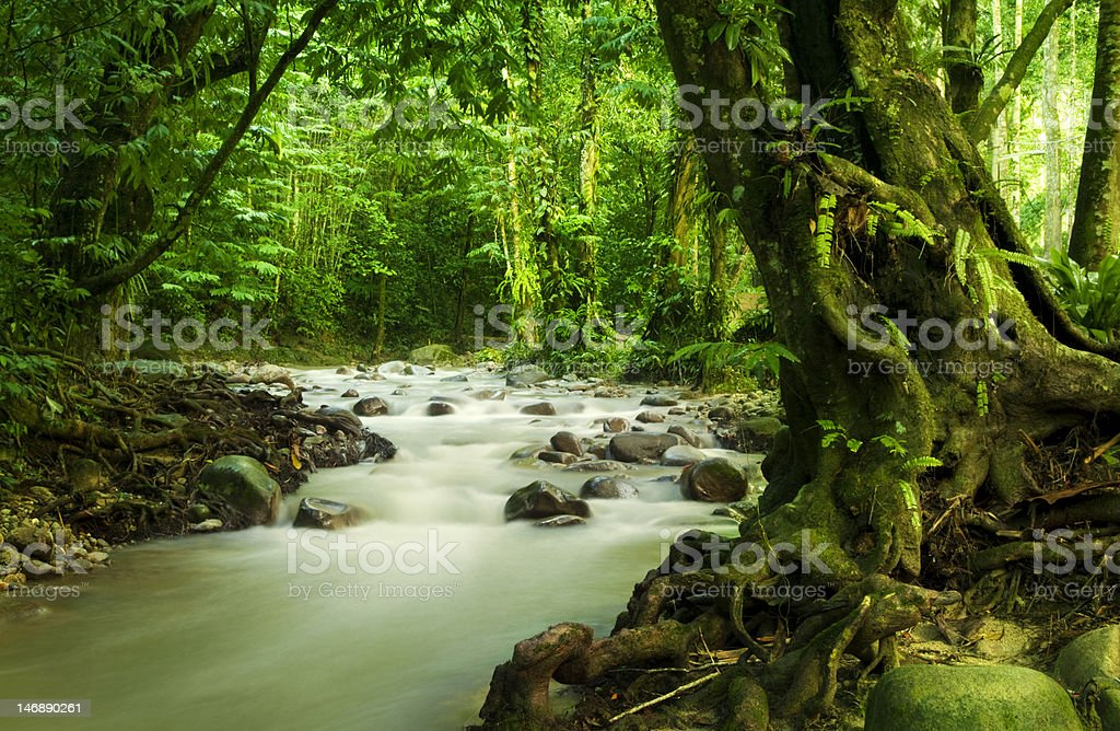 Tropical rainforest and river royalty-free stock photo