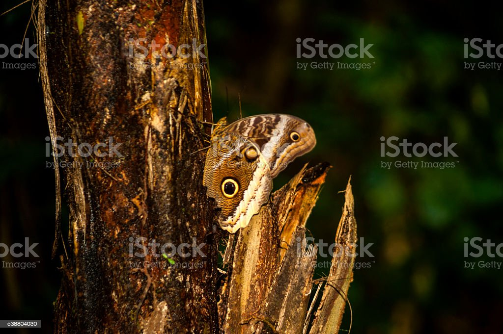 Tropical rainforest, Costa Rica stock photo