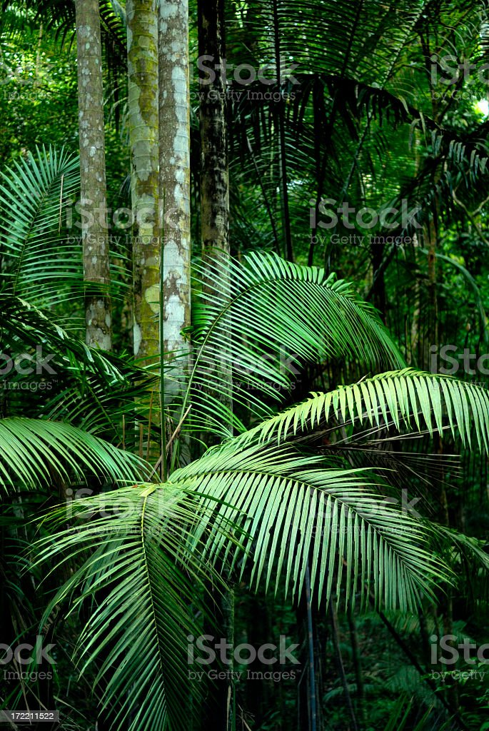 A tropical rainforest filling the picture royalty-free stock photo