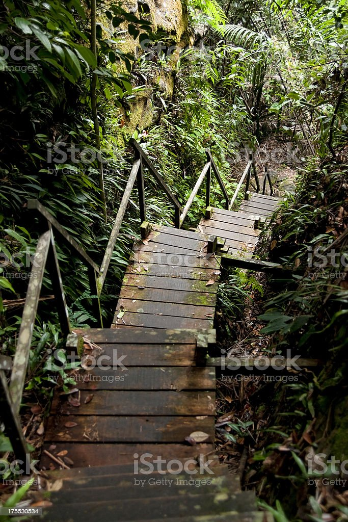 Tropical rainforest in Borneo, Malaysia. royalty-free stock photo