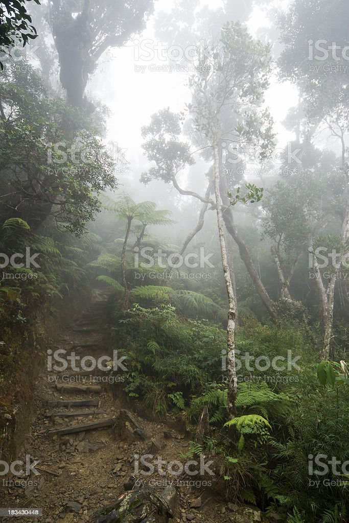 Tropical rainforest in Borneo, Malaysia. stock photo