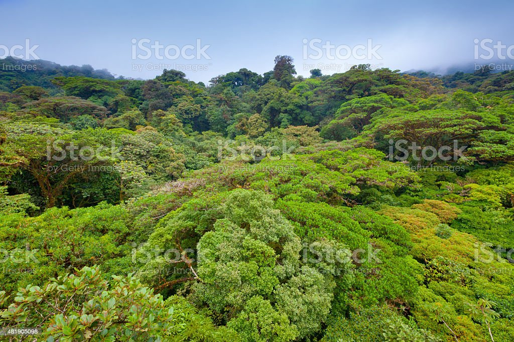 Tropical rainforest in Costa Rica stock photo