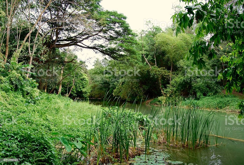 Tropical rainforest in Saraburi,Thailand stock photo