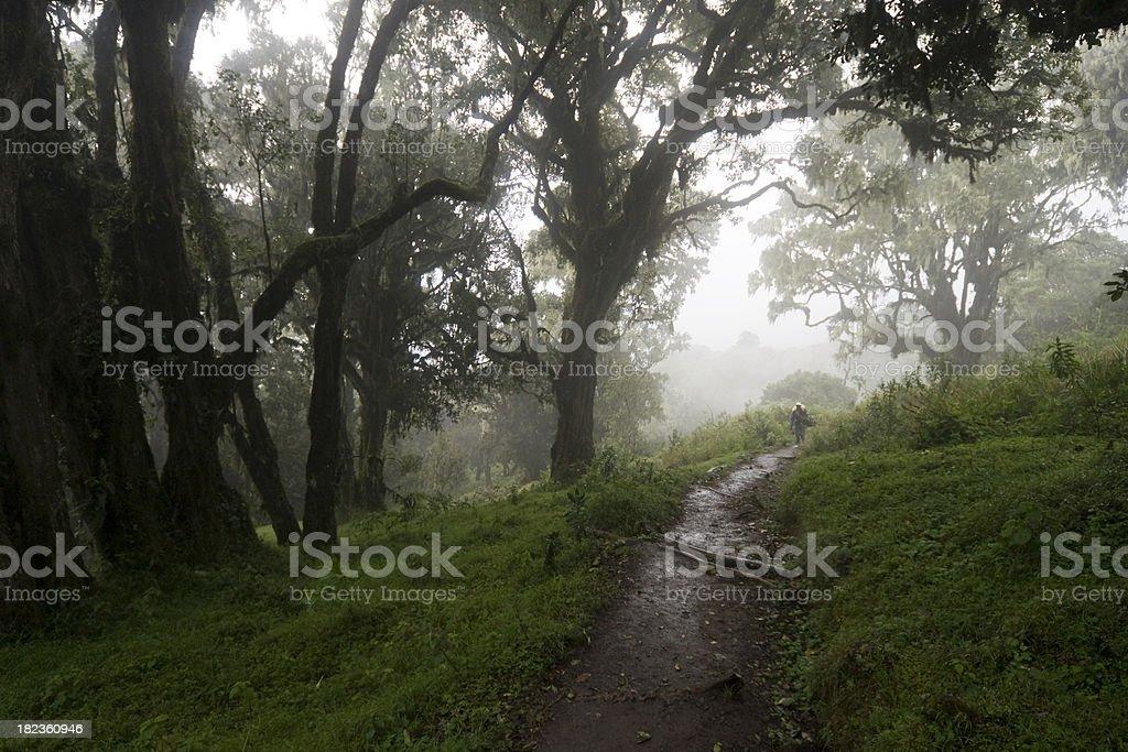 Tropical rainforest in Tanzania stock photo