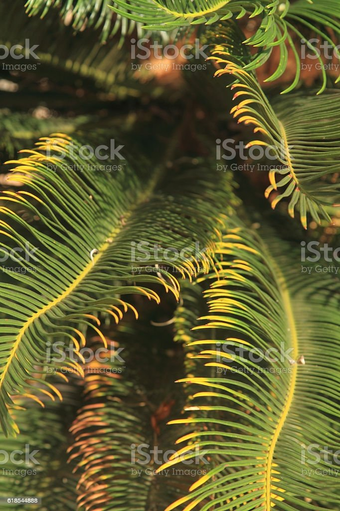 Tropical rainforest palm leaf royalty-free stock photo