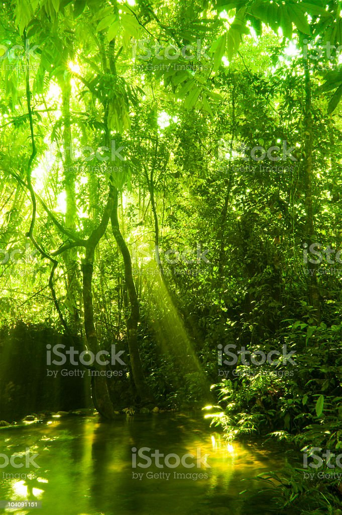 Tropical rainforest royalty-free stock photo