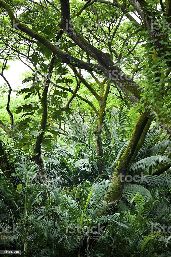 Tropical Rainforest stock photo