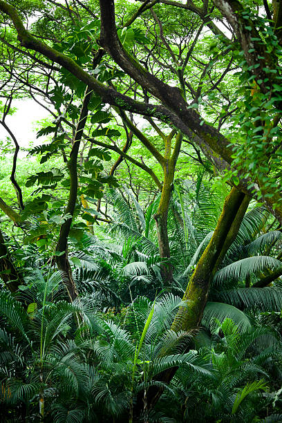 tropical rainforest: tropical rainforest | Glogster EDU ... |Tropical Rainforest Photography