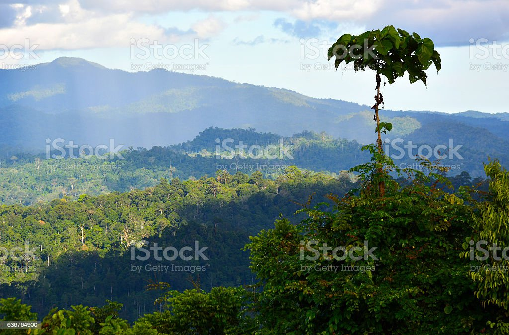 Tropical rainforest scenery in Danum Valley, Sabah Borneo stock photo