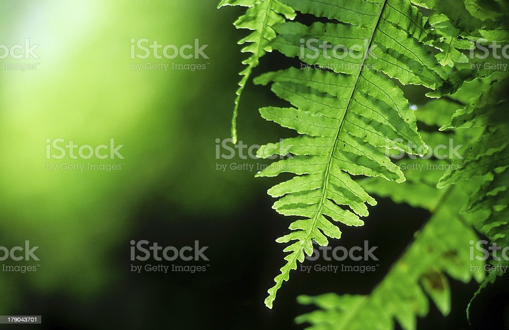Tropical rainforest, Thailand royalty-free stock photo