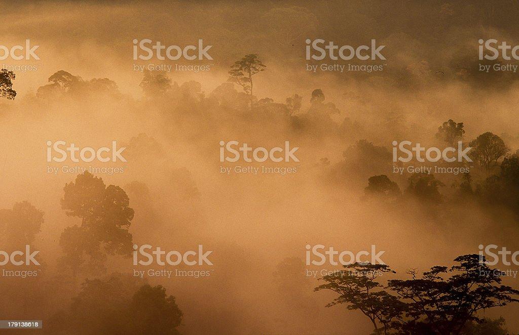 Tropical rainforest, Thailand royalty-free stock photo