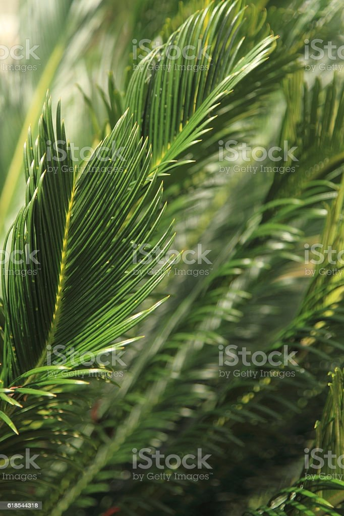 Tropical rainforest tree leaf royalty-free stock photo