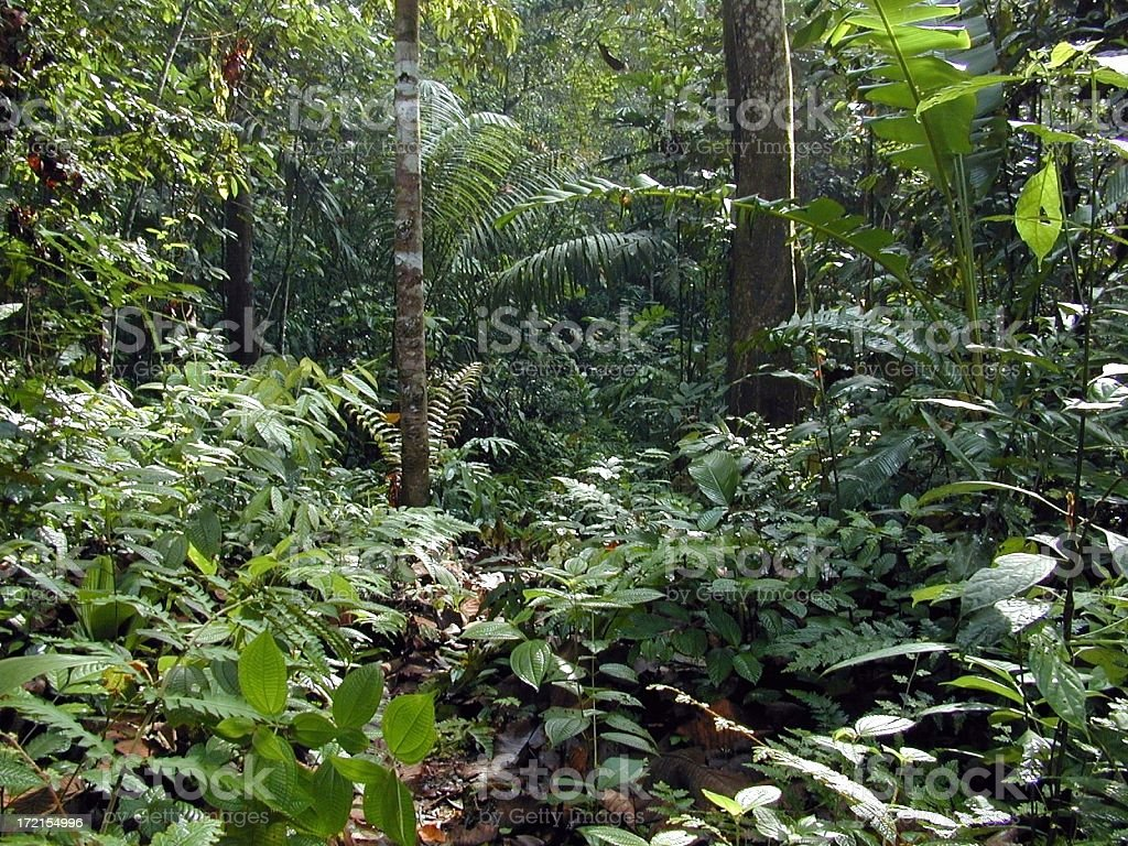 Tropical Rainforest:up close royalty-free stock photo