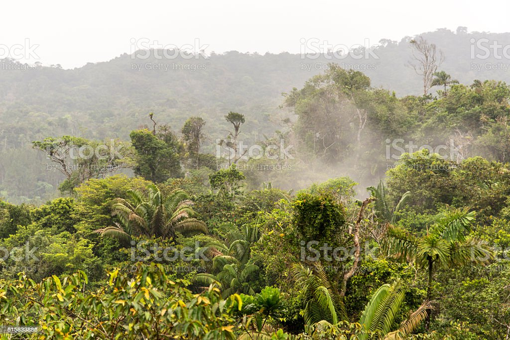 Tropical rainforrest stock photo