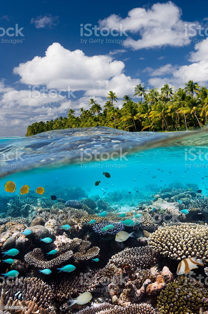 Tropical Reef - Cook Islands - South Pacific stock photo