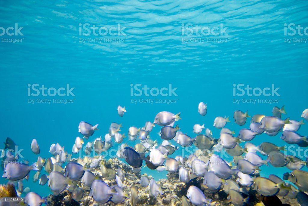 Tropical Reef in the Caribbean stock photo