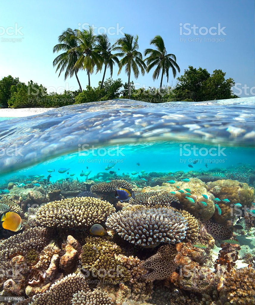Tropical Reef - Maldives stock photo