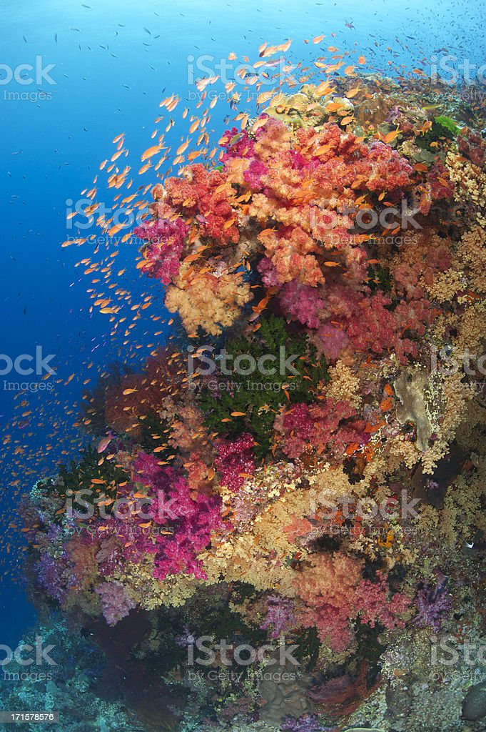 Tropical Reef stock photo
