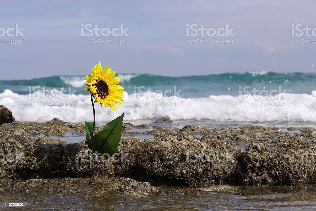 Tropical Reef Sunflower royalty-free stock photo