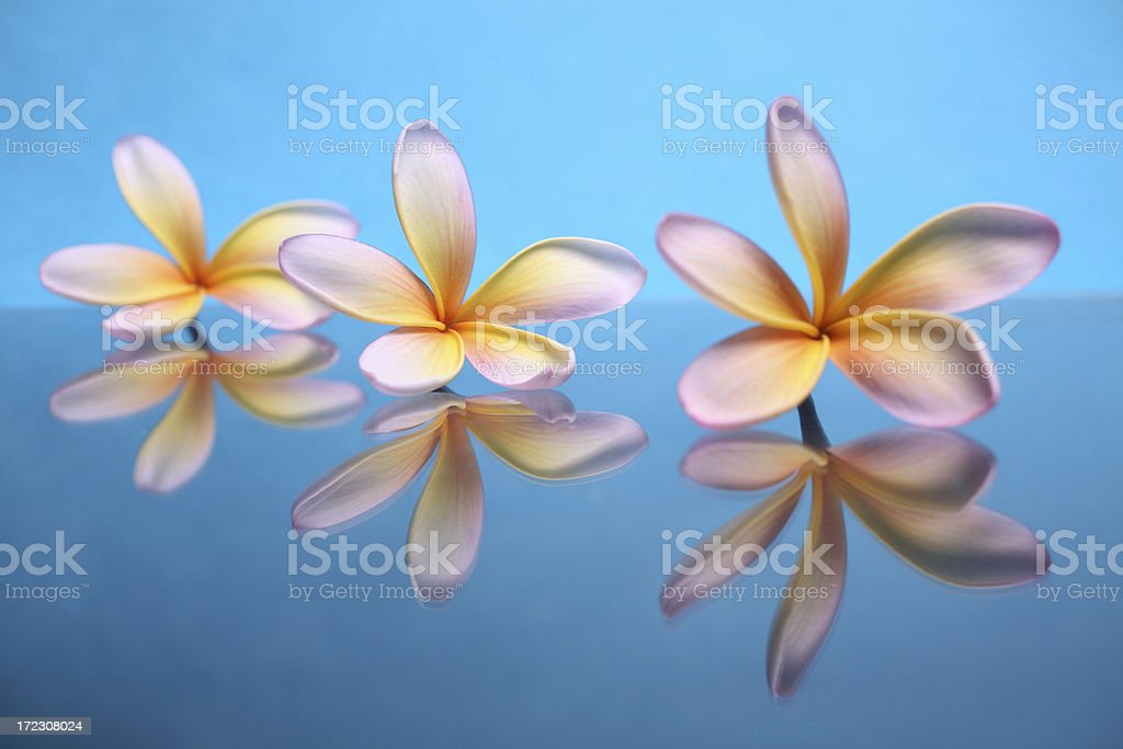 Tropical Reflections royalty-free stock photo