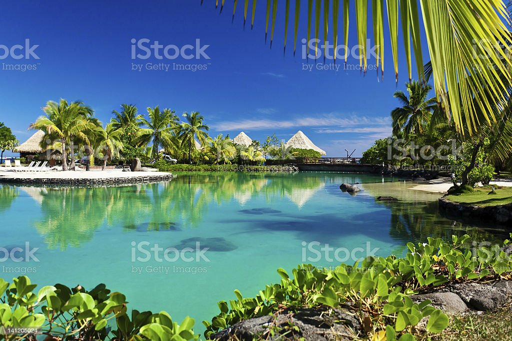 Tropical resort with a green lagoon and palm trees stock photo