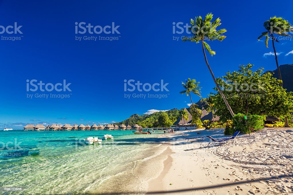 Tropical resort with sandy beach and palm trees on Moorea stock photo