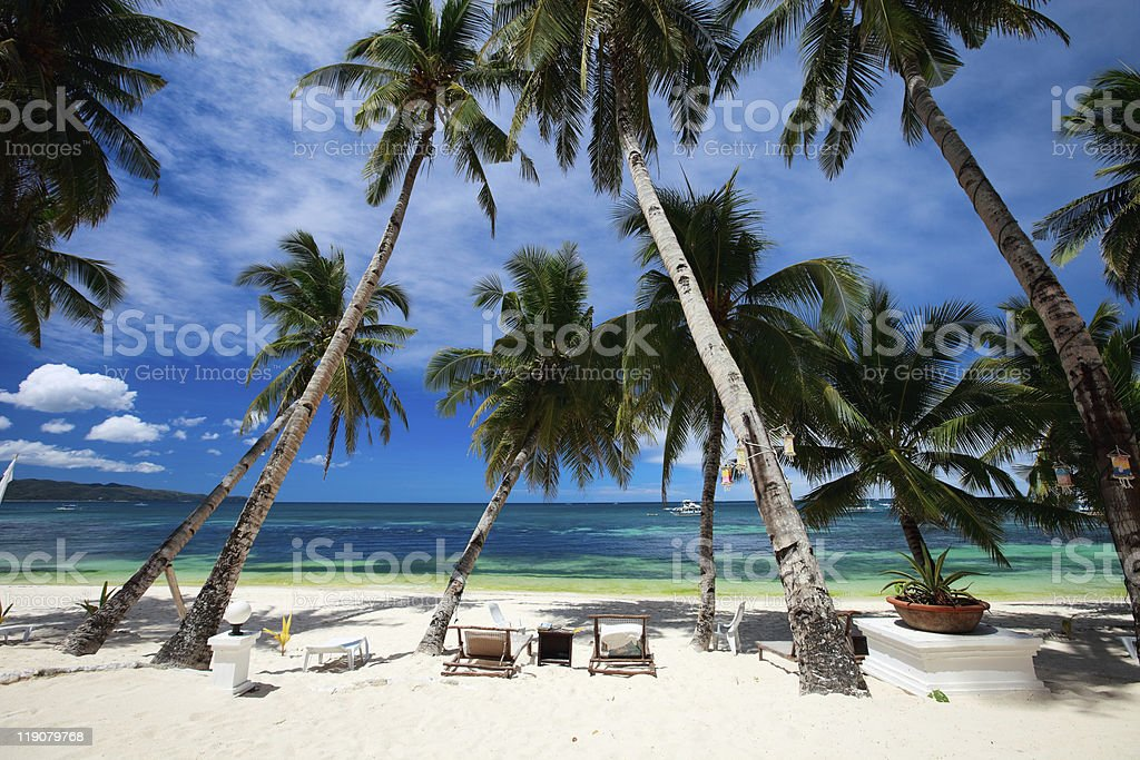 A tropical resort with tall palm trees stock photo