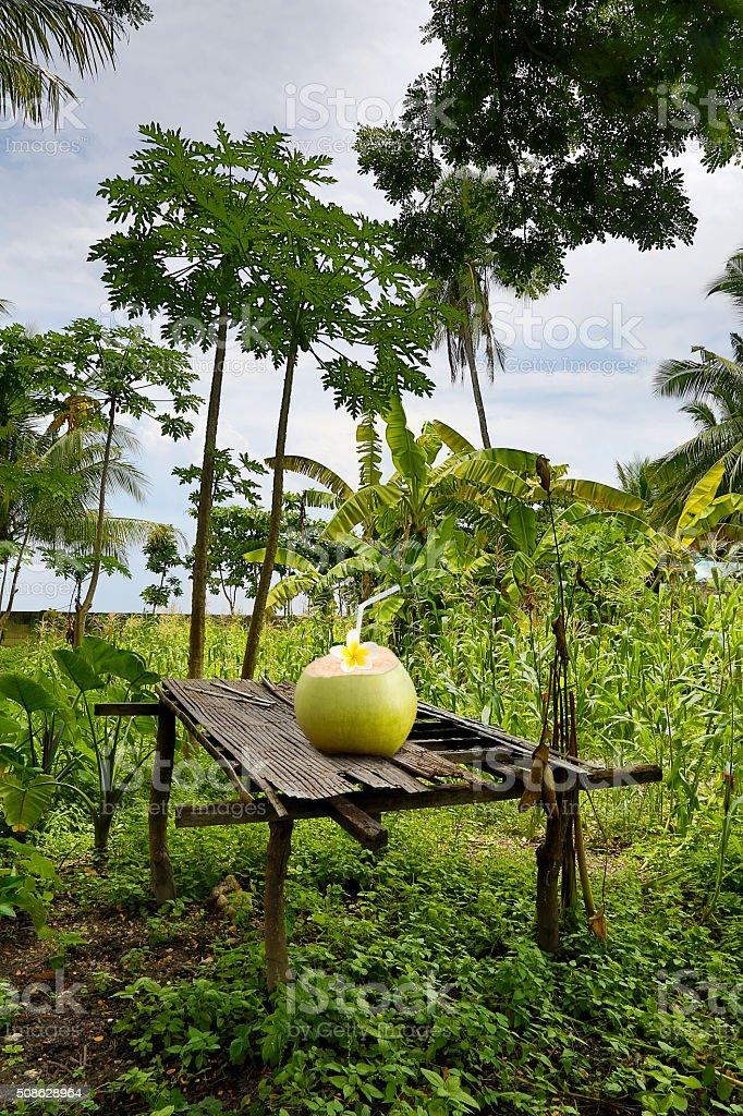 Tropische Pause Lizenzfreies stock-foto
