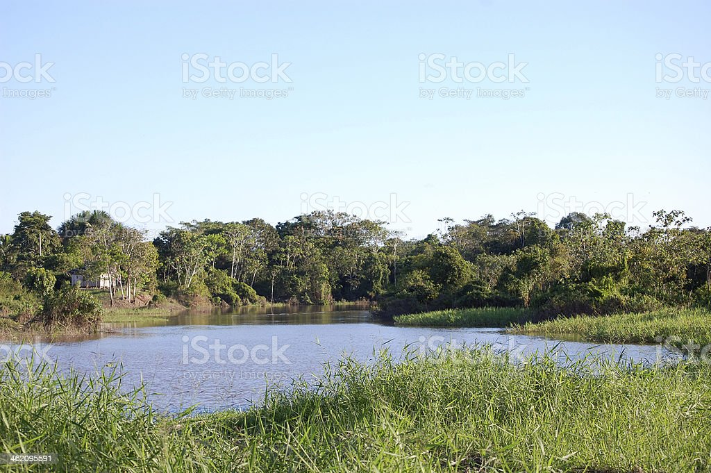 Tropical river view stock photo