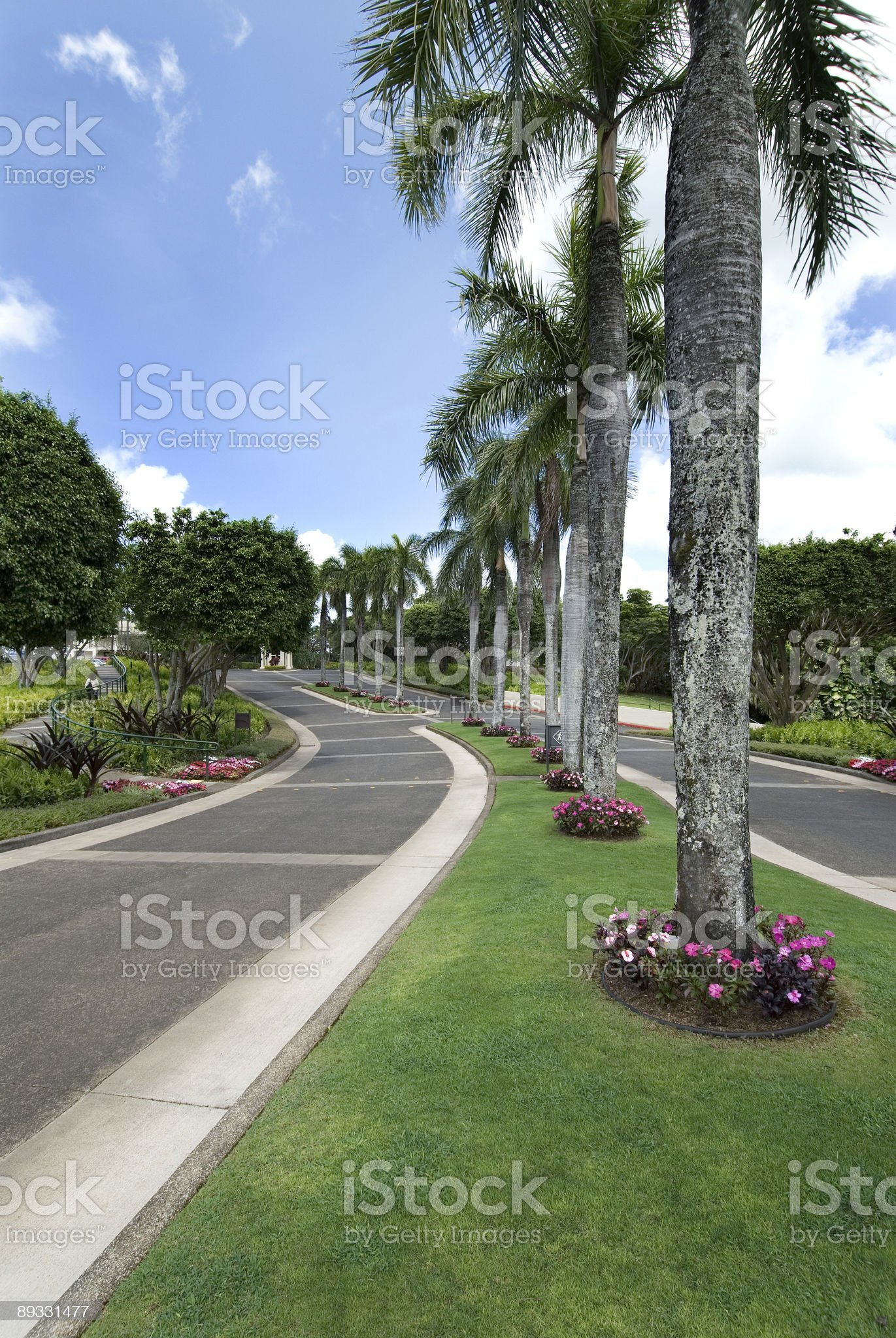 tropical roadway royalty-free stock photo