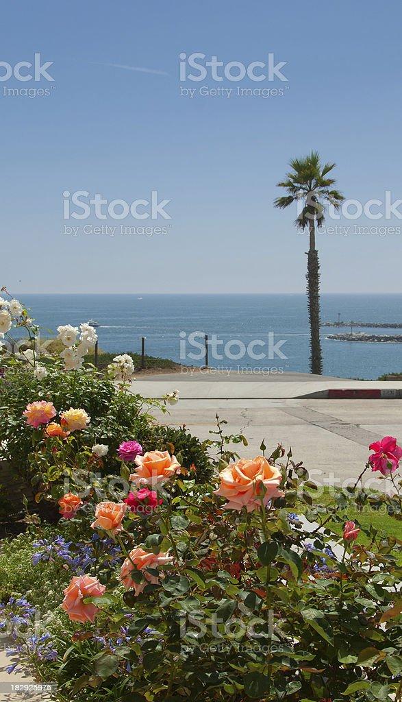Tropical Rose Garden stock photo