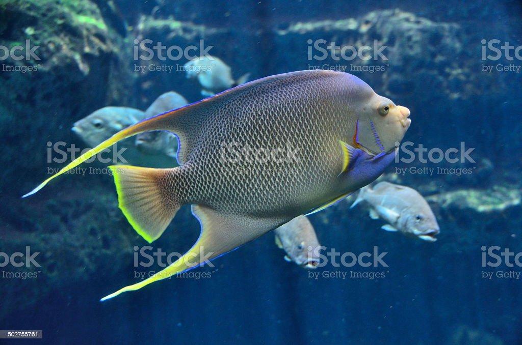 Tropical Saltwater Fish stock photo