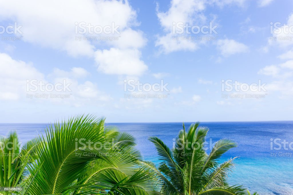 Tropical scene palm trees and fronds, ocean and sky. stock photo