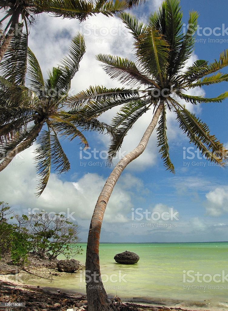 tropical scene stock photo
