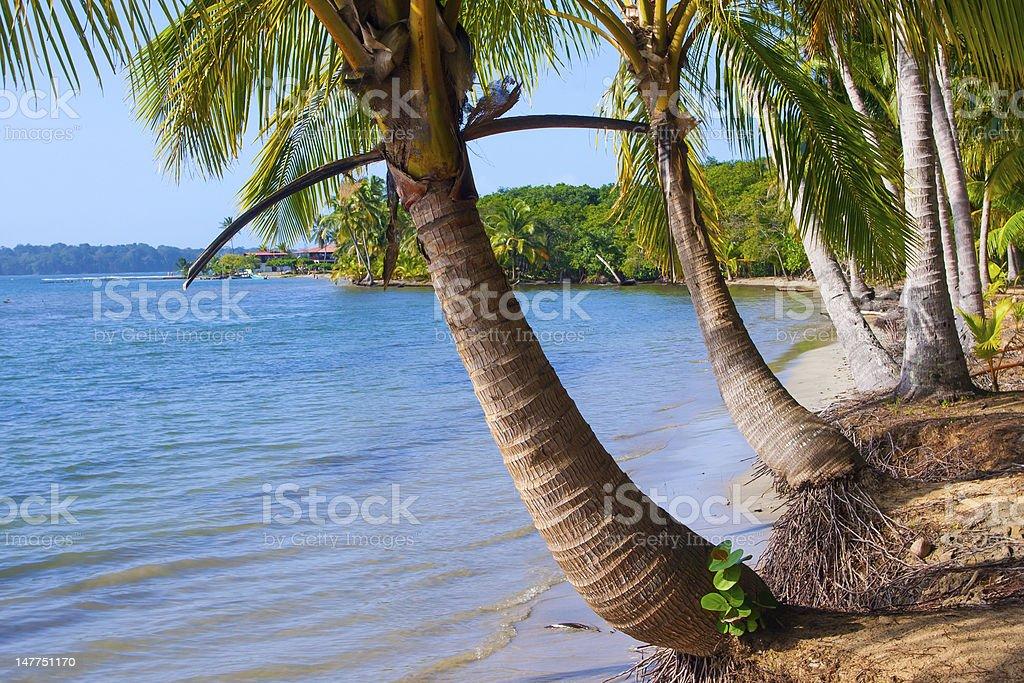 Cadre Tropical photo libre de droits
