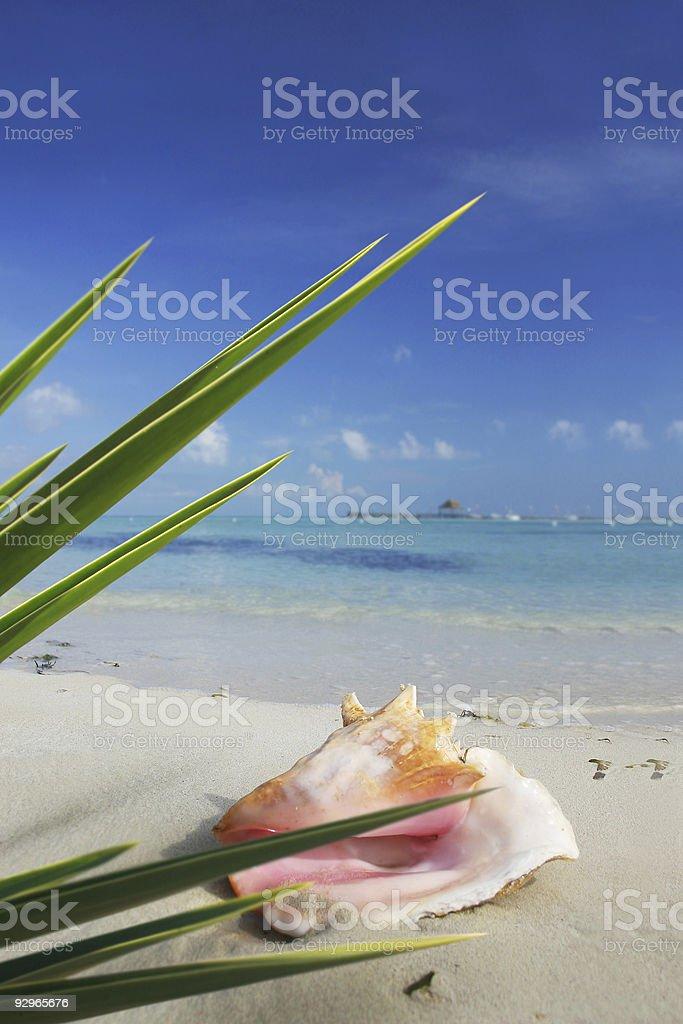 Tropical Scene royalty-free stock photo