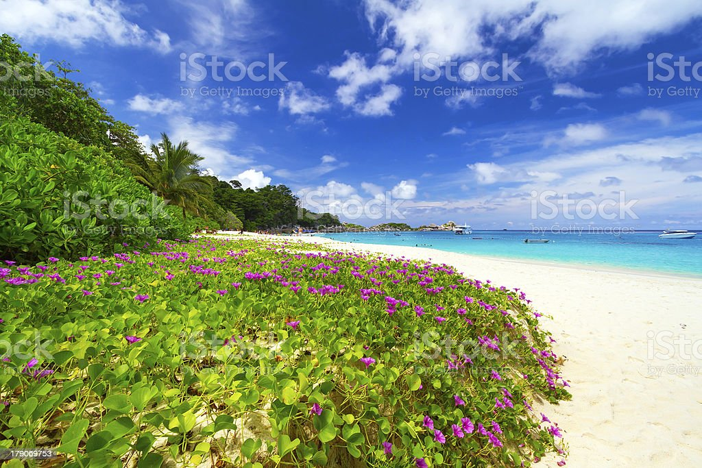 Tropical scenery of Similan islands stock photo