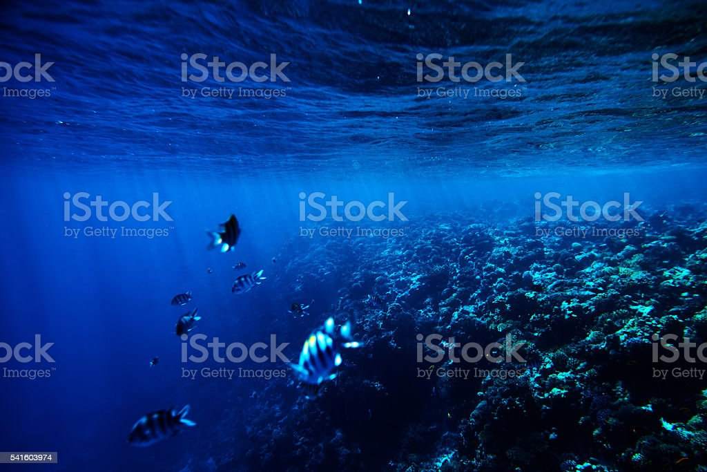 tropical sea life background stock photo