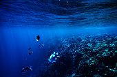 tropical sea life background