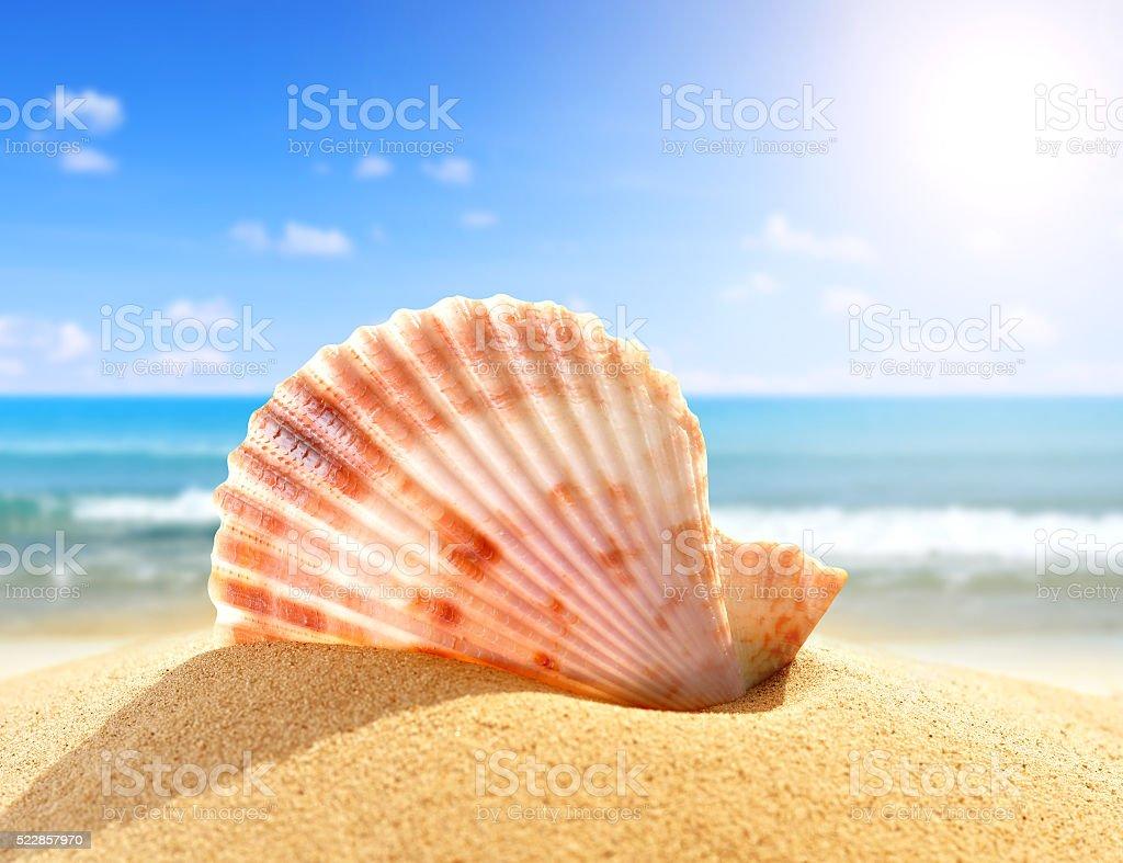 Tropical sea shell stock photo